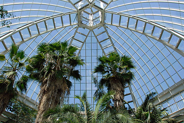 Price_Palms in greenhouse_CJBG.jpg